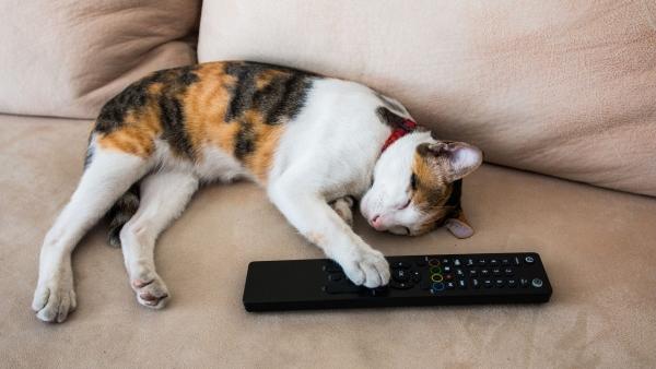 Újabb csatornák HD minőségben a HbbTV hibrid televíziós